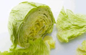 Iceberg lettuce i stock   500